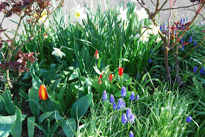 mixed spring bulbs