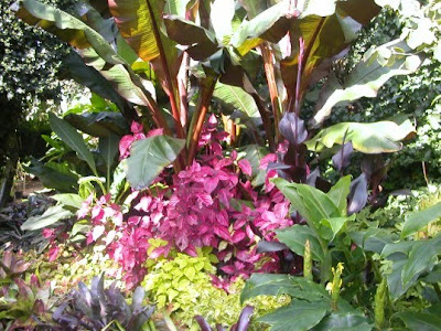 Garden border planted with cold hardy exotic plants