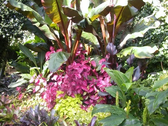 Cold hardy exotic plants for that tropical garden effect for Hardy plants for the garden
