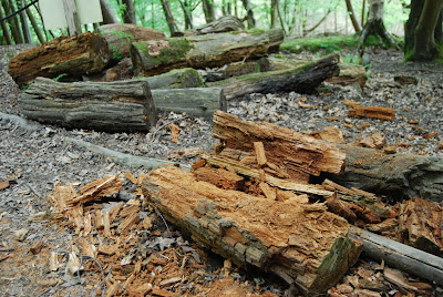 rotting logs on woodland floor