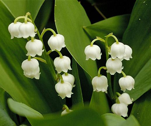 plants for dry shade the garden of eaden, Natural flower