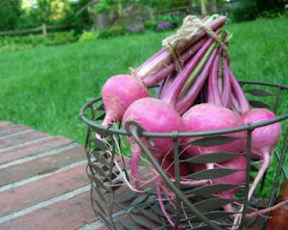 What treasures are to be found at farmers markets?! How about Scarlet Queen turnips from Maplewood's Wednesday market?