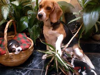 lindos perros