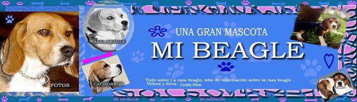 Beagle - UNA GRAN MASCOTA - MI BEAGLE BLOG