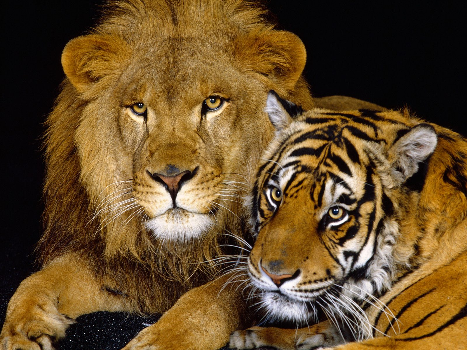 Telecharger Wallpapers ,Backgrounds: Download free Animals ...