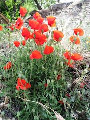 Flores de Bacares