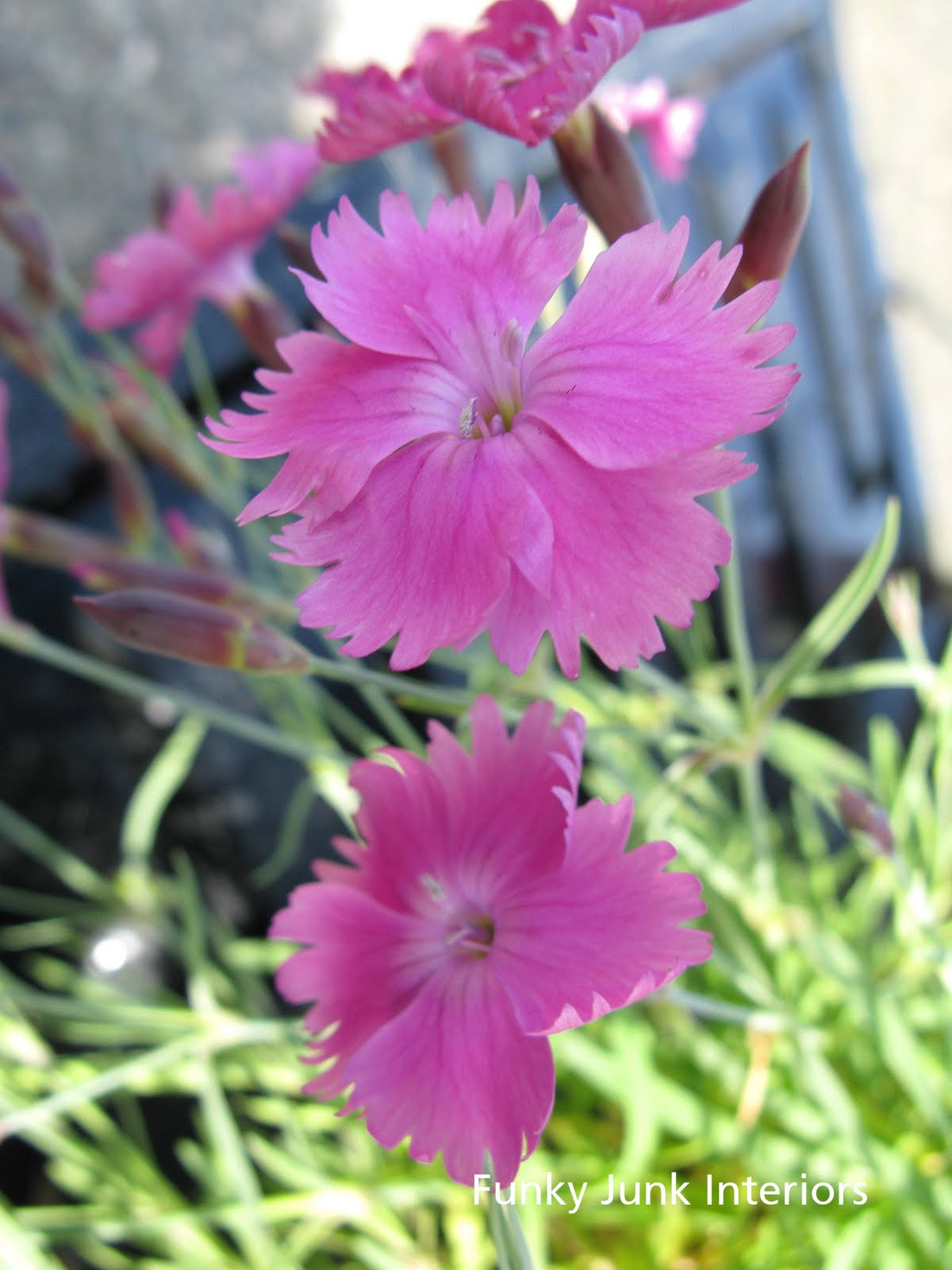 How To Plant Low Cost Low Upkeep Forever Flowering Flowerbeds