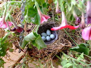 Belle Adorn: Purple Finch Nest with Blue Speckled Eggs