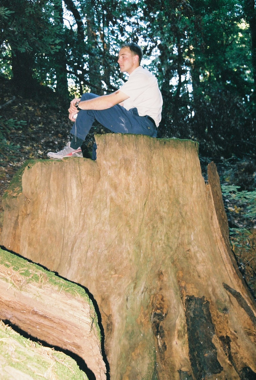 [TreeStump.jpg]