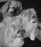 Hundene våre