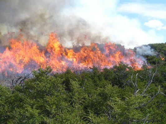 Image Result For Incendios