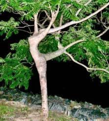 optical illusion picture