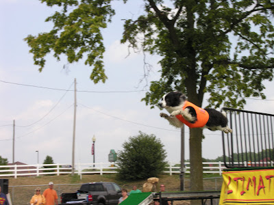 Flying Dogs at the Free Fair in Ionia, Michigan