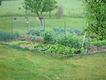 Small Garden in Spring