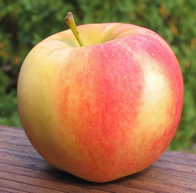 Adam's Apples: Elstar