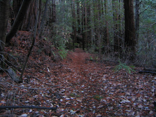 single track redwood forest