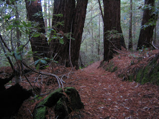 Redwood forest descent