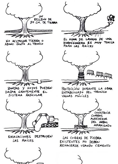 a Morteira, descargas: Normas para conservar los árboles