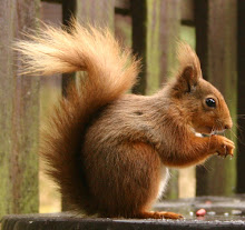 Squirrel of the Week