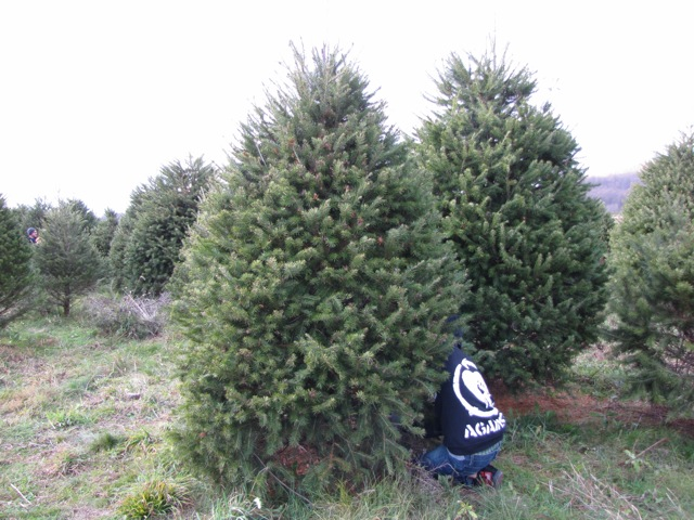 Camp Martin Travels : O' Christmas Tree / Elizabeth Farms