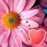 avatare cu flori de dragoste