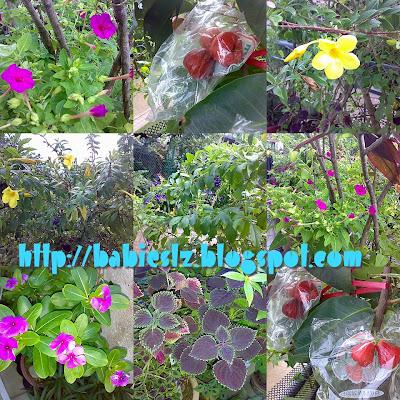 Ah Ma's plants
