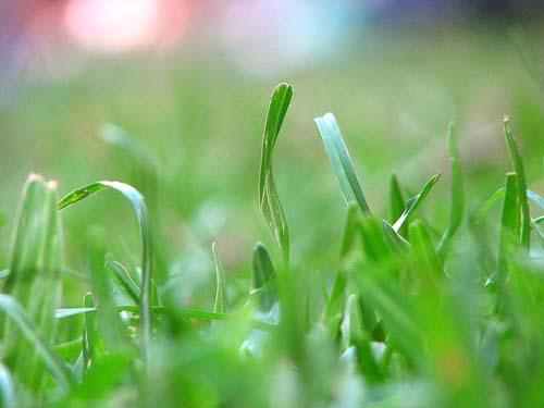 A nossa grama é de nanquim