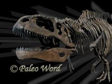 PALEO  WORLD