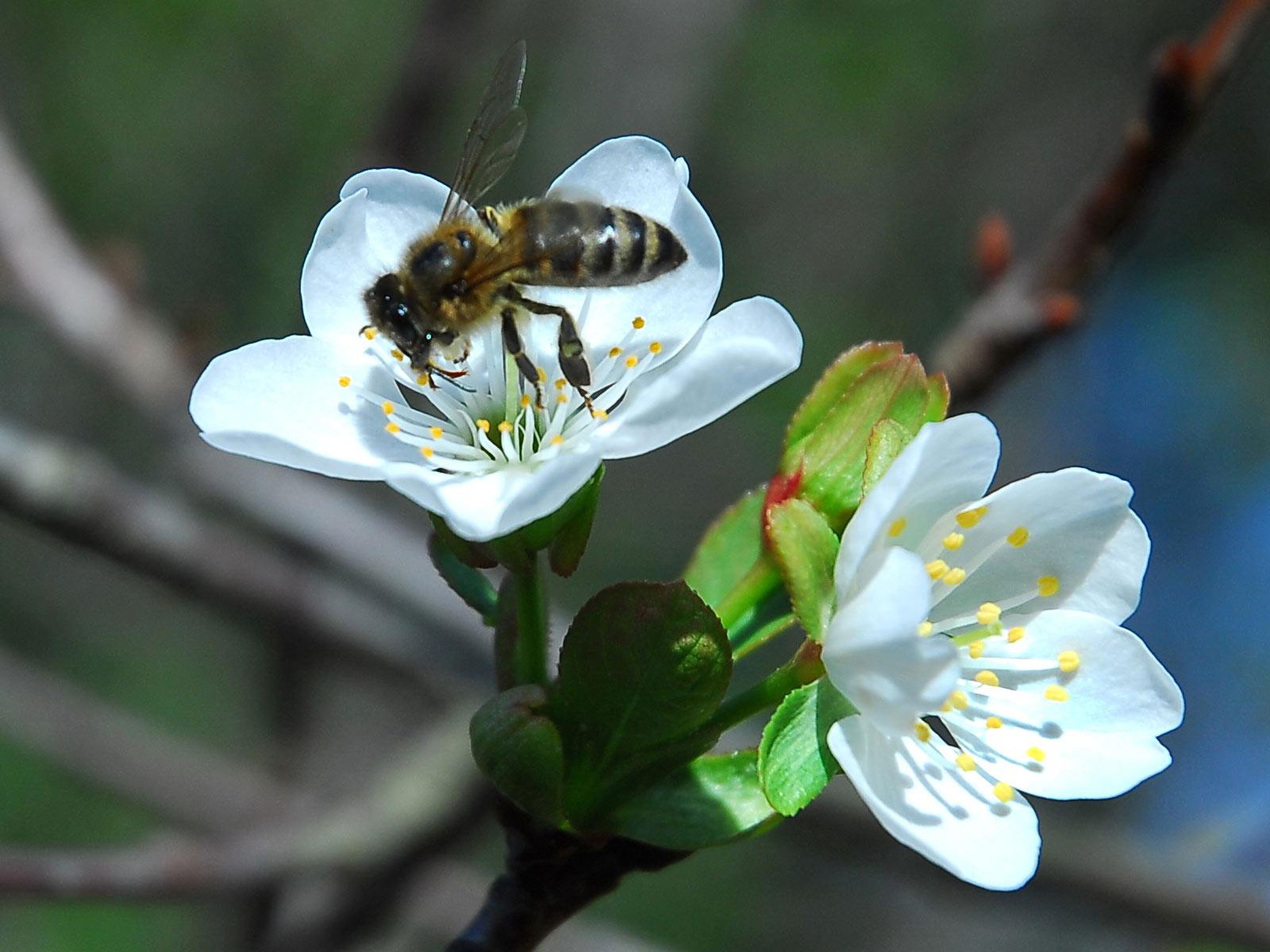 Foto Per Desktop Primavera