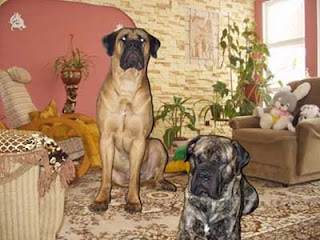 Free dog breed pictures: September 2008