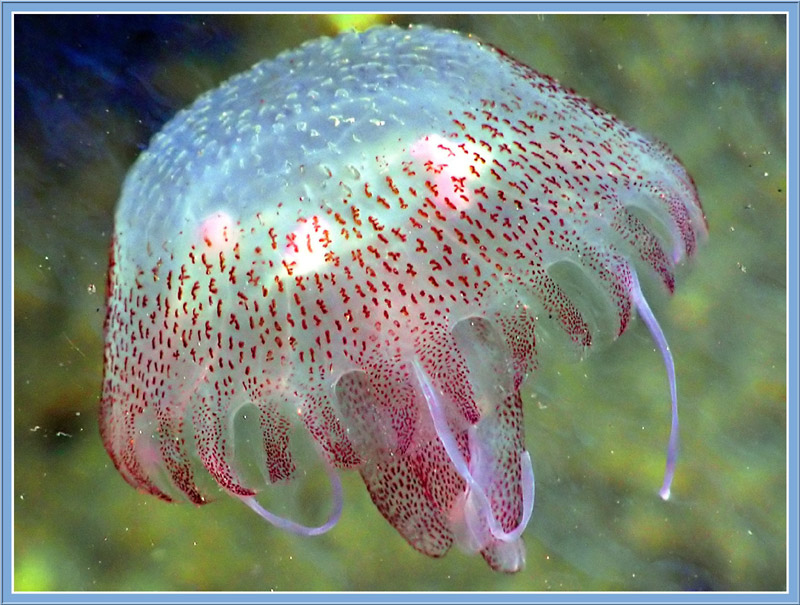 [another_jellyfish.jpg]