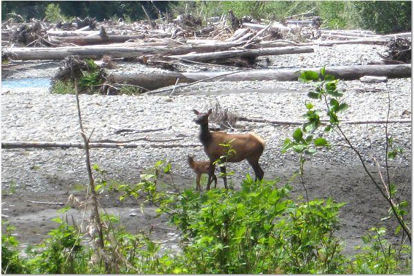 [elk]