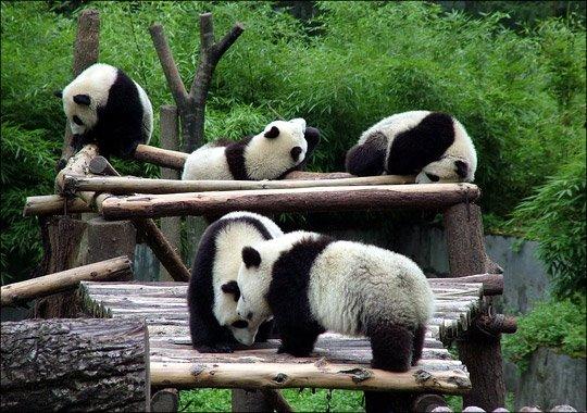 [pandas]