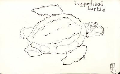 skellyscribblez: Loggerhead Turtle
