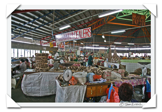 picture photograph image the kava dealers at Suva market Fiji 2008 copyright of sam breach http://becksposhnosh.blogspot.com/