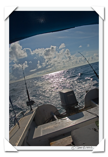 picture photograph image reef fish caught fishing in fiji 2008 copyright of sam breach http://becksposhnosh.blogspot.com/