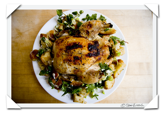 picture photograph roast chicken and bread salad 2007 copyright of sam breach http://becksposhnosh.blogspot.com/