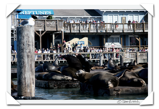 picture photograph San Francisco tourists watching the sealions at Fishmern's wharf copyright of sam breach http://becksposhnosh.blogspot.com/