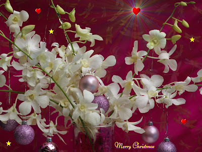 Christmas Flower wallpapers
