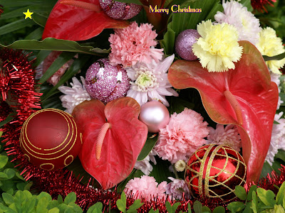 Free Xmas Flower wallpapers
