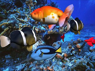 underwater xmas diving ffm full face mask christmas