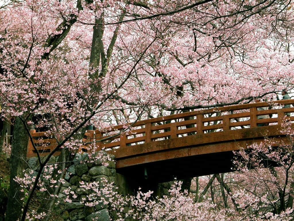 lente achtergronden hd - photo #44