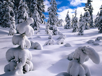 Wallpaper met naaldbomen met sneeuw