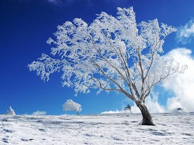 Winter achtergrond met een boom en blauwe lucht