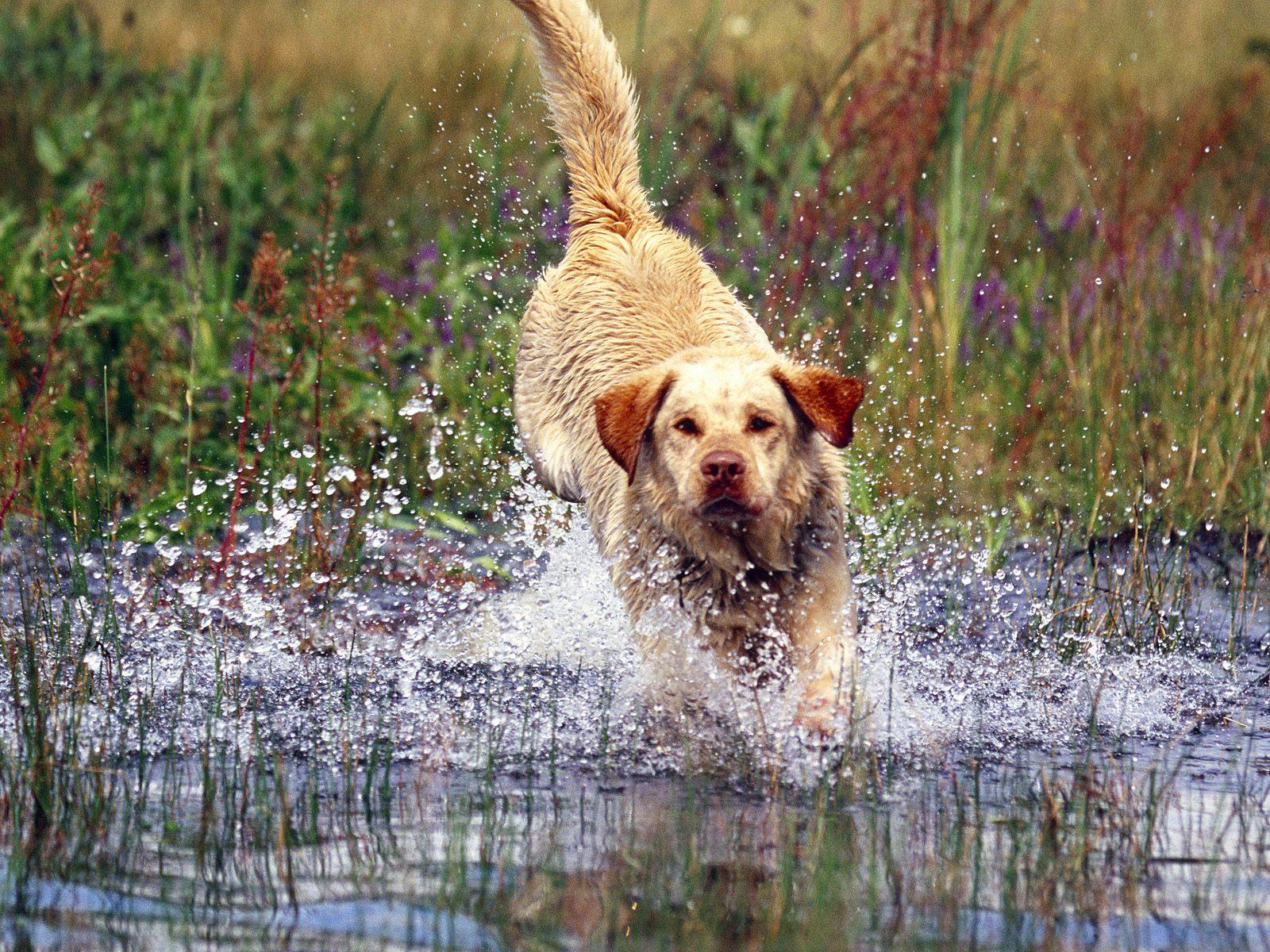 honden achtergronden hd wallpapers - photo #13