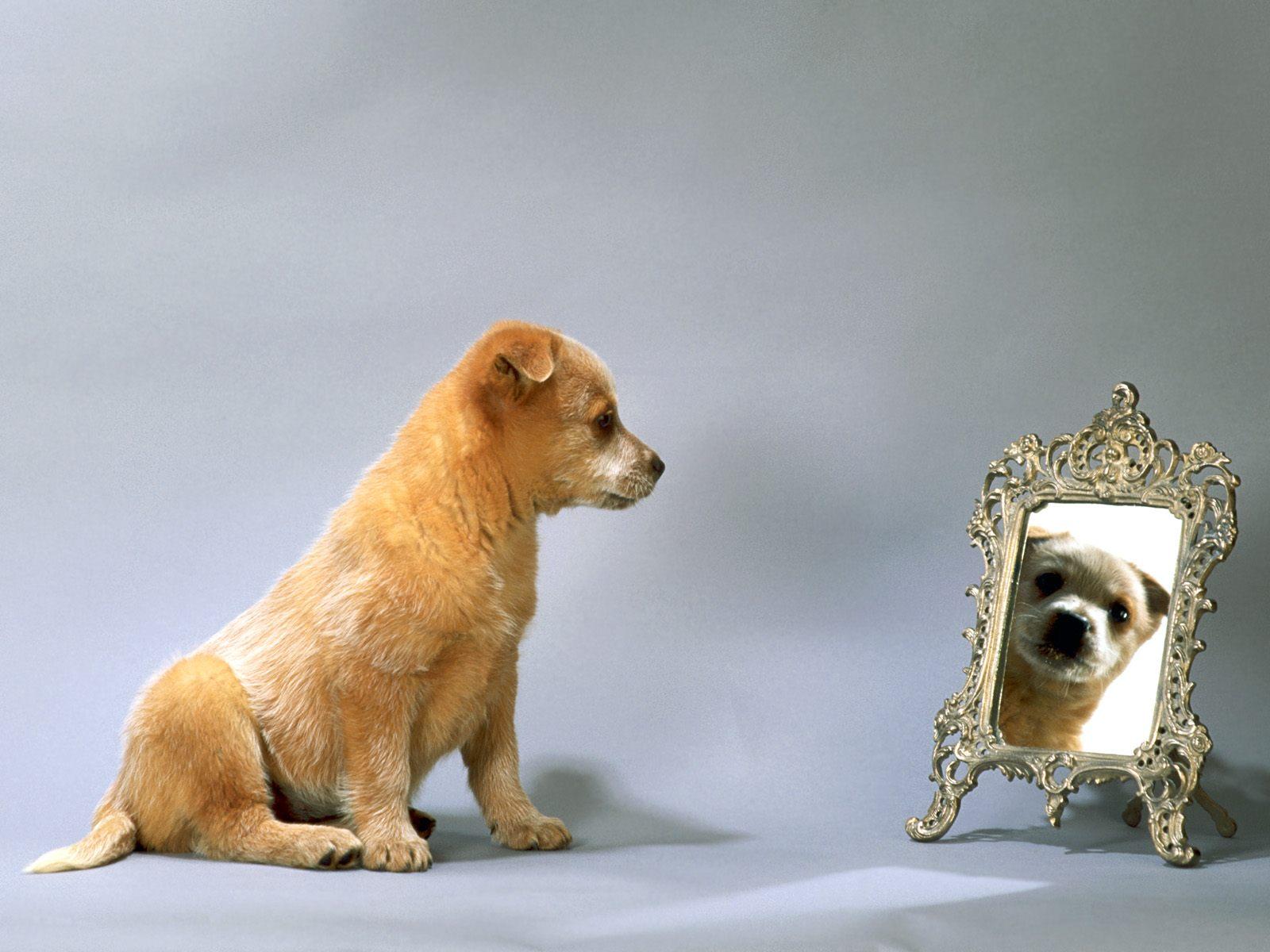 honden achtergronden hd wallpapers - photo #20