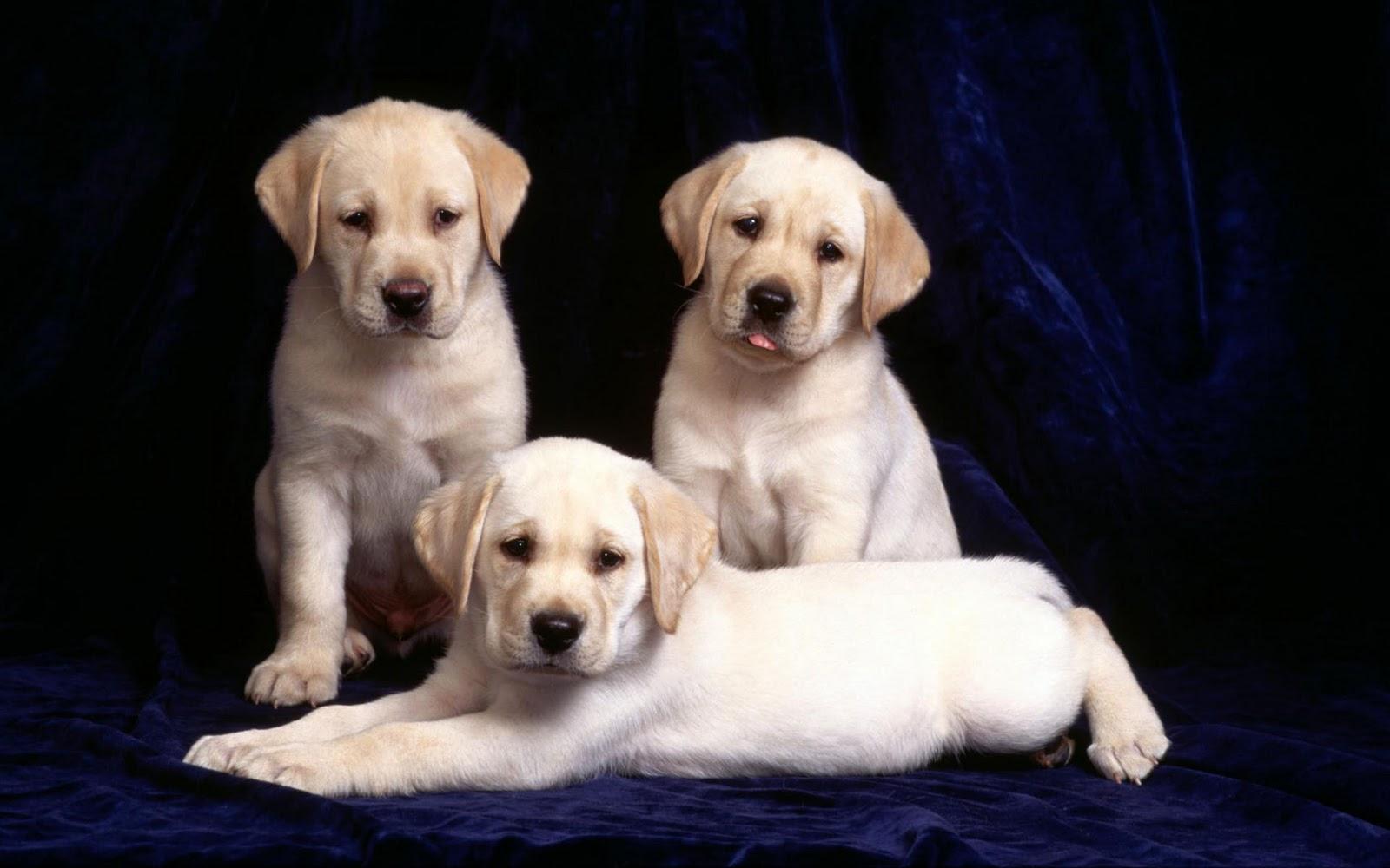 honden achtergronden hd wallpapers - photo #4