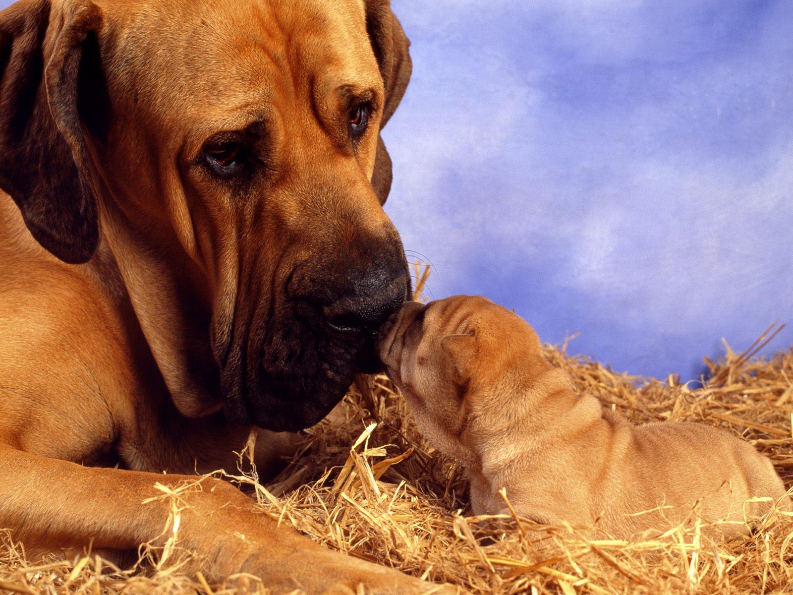 honden achtergronden hd wallpapers - photo #49