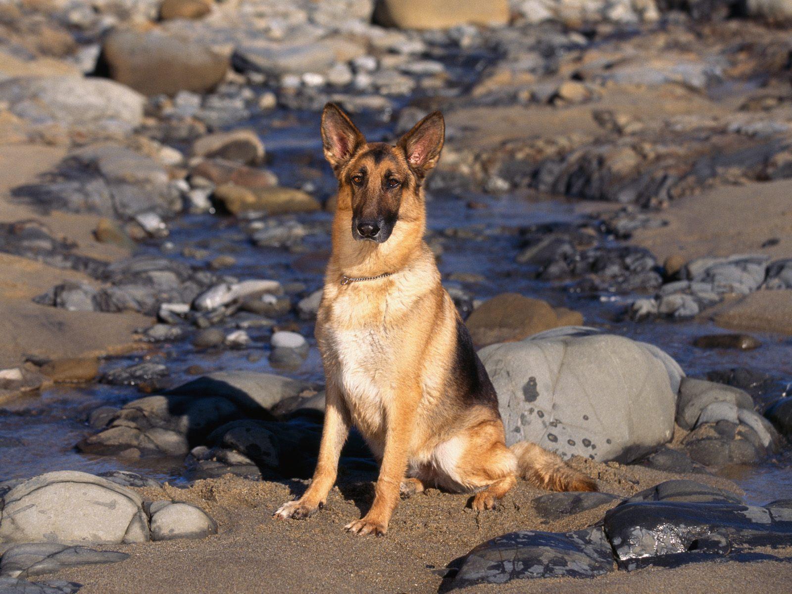 honden achtergronden hd wallpapers - photo #22