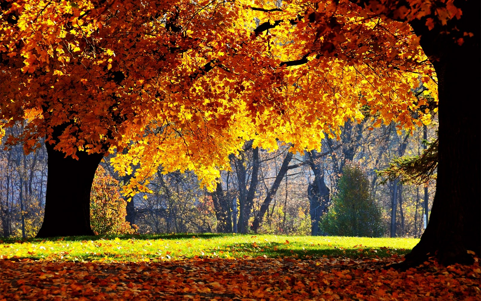 Hd Desktop Wallpapers Autumn Wallpapers